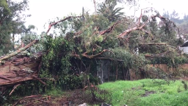 the recent rain storm has brought a tree down on a house at 3907 dixie canyon in sherman oaks - sherman oaks stock videos & royalty-free footage