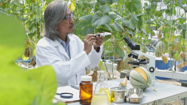 the researchers tested the sweetness of the melon crop varieties for research and development. - climate scientist stock videos & royalty-free footage