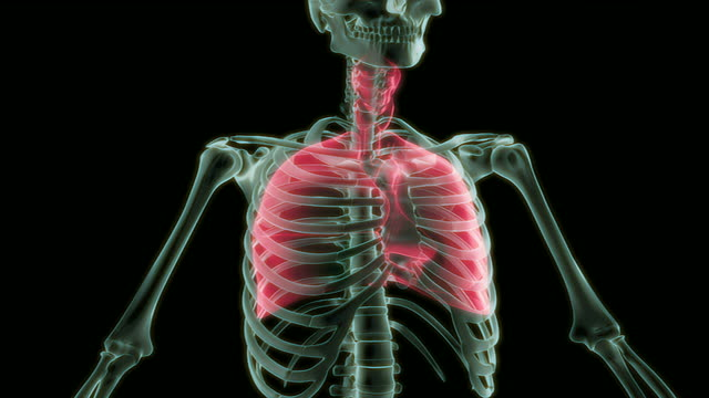the respiratory system - thyroid gland stock videos & royalty-free footage