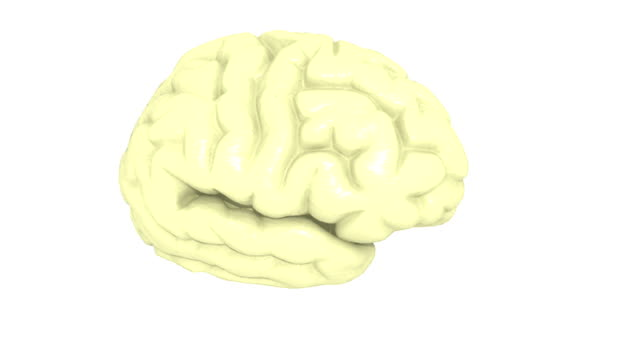 the right hemisphere of the brain rotates as other, color-coded parts of the brain, the cerebral hemispheres, the brain stem, the cerebellum and the diencephalon, fade in until the brain is complete. - midbrain stock videos & royalty-free footage