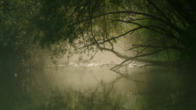 ls the river in morning mist - riverbank stock videos & royalty-free footage