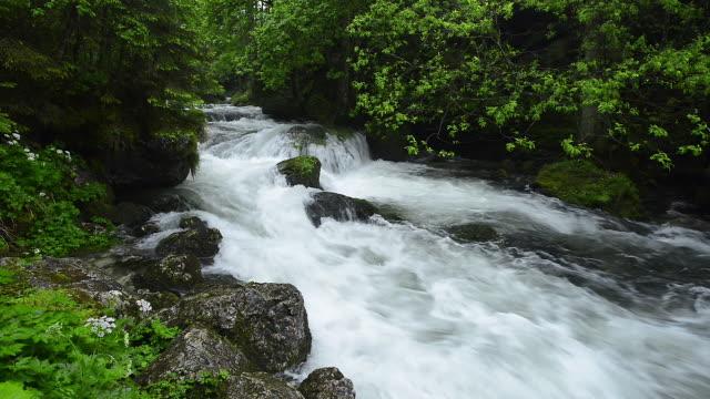 The river Schwarzbach near the famous Golling waterfall in spring. Schwarzbach, Gollinger Wasserfall, Golling Waterfall, Tennengau, Hallein, Salzburg, Austria.