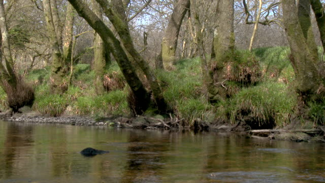 the riverbank of a small scottish river in a rural setting - johnfscott stock videos and b-roll footage