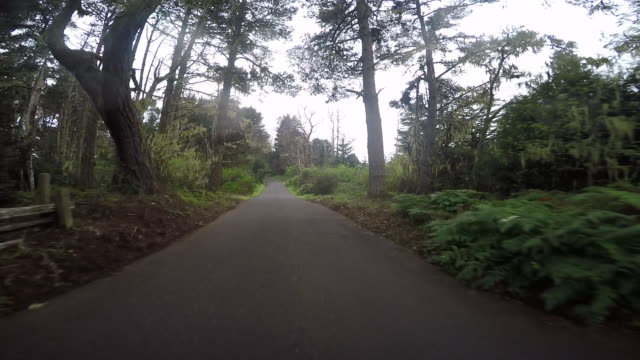 the road on highway 1 near mendocino with trees fog and cars passing by. - pacific coast stock videos & royalty-free footage