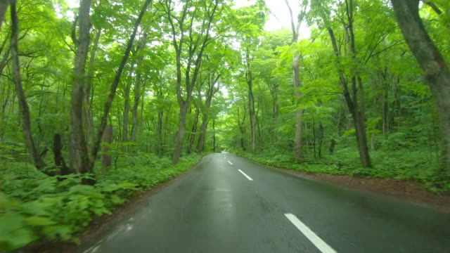 the road through the forest in rain - natural condition stock videos & royalty-free footage