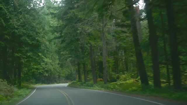 the road trip - mt rainier national park stock videos & royalty-free footage