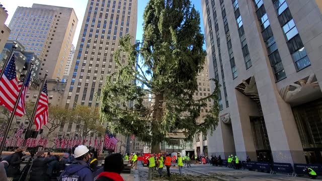 the rockefeller center christmas tree arrives at rockefeller plaza and is craned into place on november 14, 2020 in new york city. - rockefeller center christmas tree stock videos & royalty-free footage