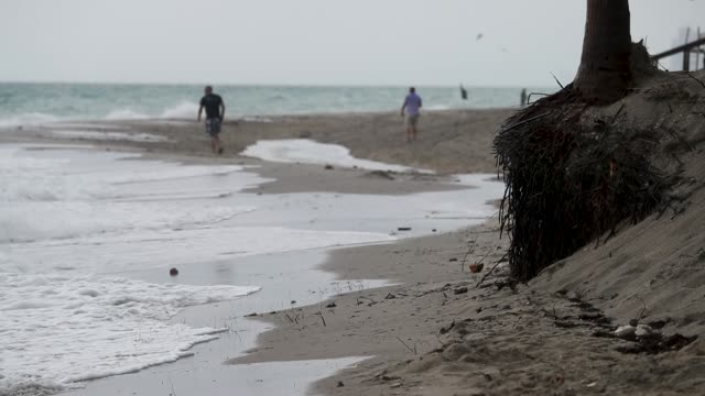 the roots of a palm tree are seen after the beach was eroded away on june 8 2018 in dania beach florida recent storms eroded the beach as... - eroded stock videos & royalty-free footage