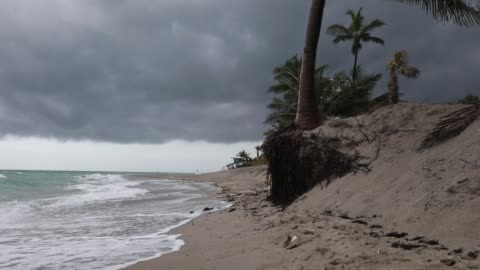 the roots of a palm tree are seen after the beach was eroded away on june 8, 2018 in dania beach, florida. recent storms eroded the beach as... - eroded stock videos & royalty-free footage