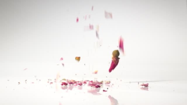 vídeos y material grabado en eventos de stock de the roses flower dancing in slow motion with white background - hierba