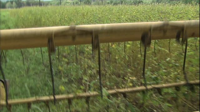 The rotating cutter of a combine harvester cuts buckwheat in a field in Hokkaido, Japan.