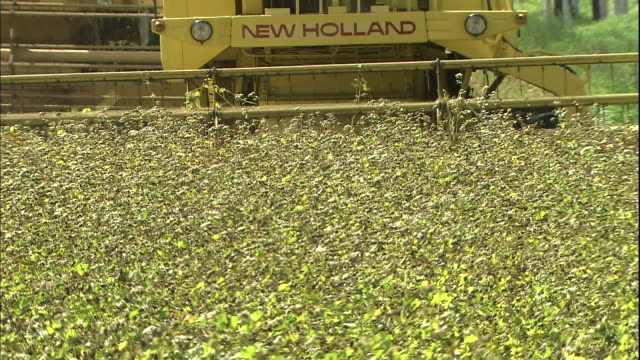 the rotating cutter of a combine harvester cuts buckwheat in hokkaido, japan. - buckwheat stock videos & royalty-free footage