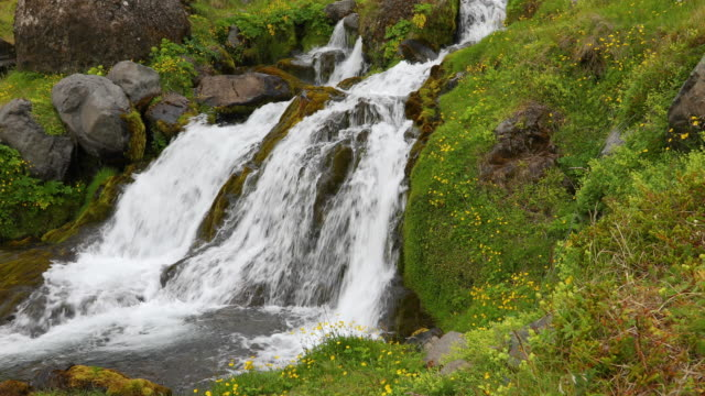 vidéos et rushes de the rushing waters of kálfá waterfall in iceland in the summer time - renoncule d'asie