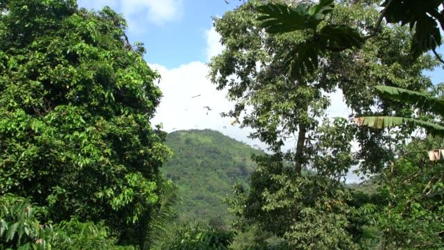 the sacred bat valley near kpalime, togo - pavel gospodinov stock videos & royalty-free footage