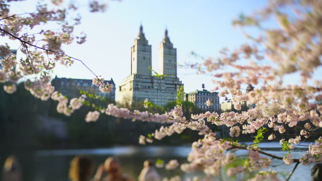 the san remo and central park west historical district buildings can be seen through among the cherry blossom trees over the lake in central park new york city ny usa on apr. 17 2019. - remo stock videos and b-roll footage