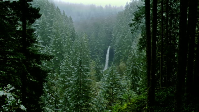 vídeos de stock e filmes b-roll de the scenic north falls flows down among a forest of evergreens. - salem oregon