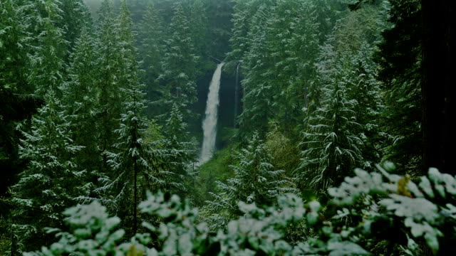 the scenic north falls flows down among a forest of evergreens. - セーラム点の映像素材/bロール
