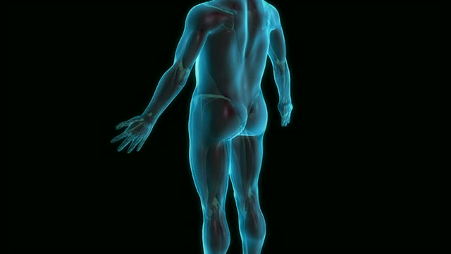 the sciatic nerve - digital animation stock videos & royalty-free footage