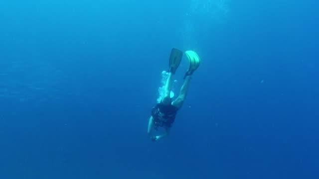 stockvideo's en b-roll-footage met de zee is te groot om niet te verkennen - zwemvlies