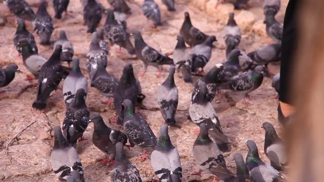 The Sebilj fountain with pigeons