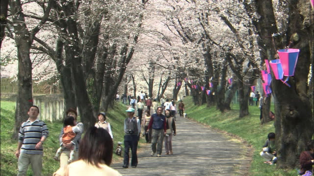 the sen-bon zakura(1,003 cherry trees) in gunma - von bäumen gesäumt stock-videos und b-roll-filmmaterial
