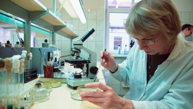 The senior 50-years-old women, scientists, working together with the microscope and bacterial culture in the college microbiology lab