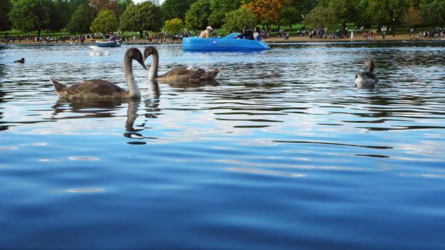 the serpentine lake in london hyde park (uhd) - the serpentine london stock videos & royalty-free footage