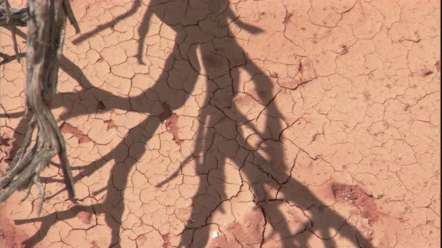 The shadow of a dead branch shifts over the desert sand, New South Wales. Available in HD.