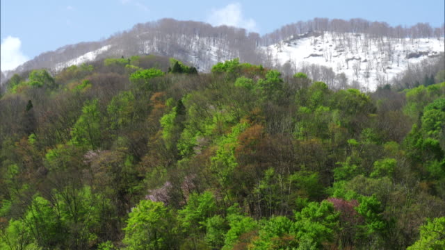 the shirakami mountains in the spring - aomori prefecture stock videos & royalty-free footage