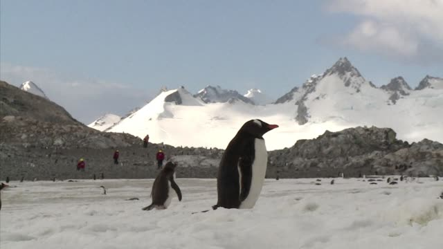 the shrimps that sustain penguins seals and whales in the antarctic peninsula are getting scarcer under threat from climate change and fishing - cetacea stock videos & royalty-free footage