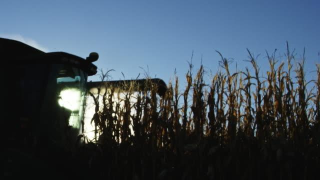 La Silhouette d'une moissonneuse-batteuse avec une vis sans fin se déplace à travers un champ de maïs sous un ciel bleu