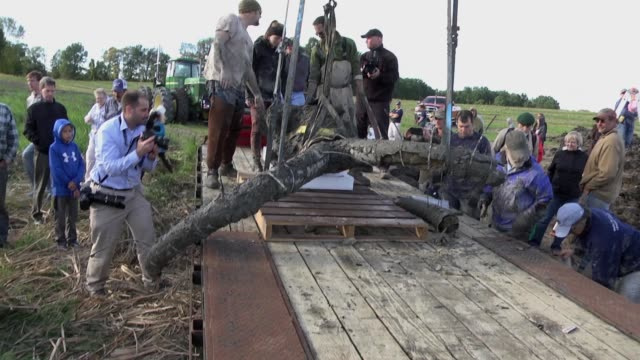 vidéos et rushes de the skull and tusks of a mammoth skeleton are lifted onto a wagon on a farm in chelsea, michigan / the skeleton of the animal, thought to be 10,000... - archéologie