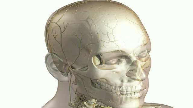 the skull - parietal bone stock videos & royalty-free footage