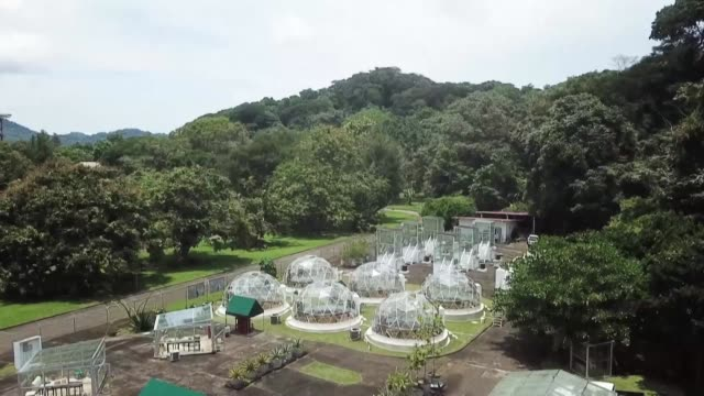 the smithsonian tropical dome project in panama run by german plant physiology expert klaus winter simulates future climate scenarios using domes - anatomy stock videos & royalty-free footage