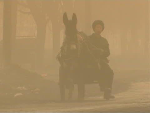 the smog infested city of linfen in china a mule pulls a man on a cart down a road as motor vehicles pass by amid the smog / various of cyclists and... - skadedjursangrepp bildbanksvideor och videomaterial från bakom kulisserna