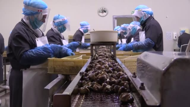 """the snails are collected from nature and processed by women in facilities as """"stuffed and garlic butter snails"""" are exports to many countries of the... - industry stock videos & royalty-free footage"""