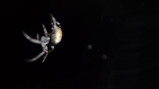 vídeos y material grabado en eventos de stock de the spider sits in the web at night. dark background big brown spider on the web. araneus is a genus of common orb-weaving spiders. european garden spider. - parte del cuerpo animal