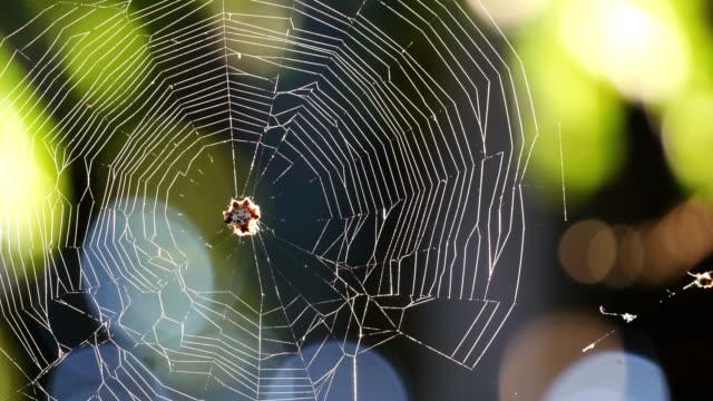 vídeos y material grabado en eventos de stock de la telaraña (cobweb) - geometría