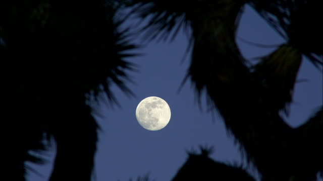 the spiny branches of a joshua tree frame a full moon. - joshua tree stock videos and b-roll footage
