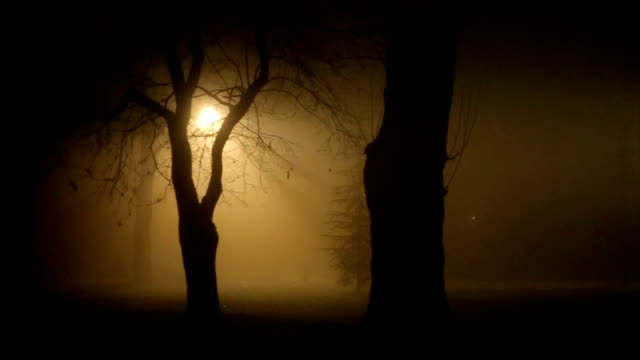 the spooky scene of the park in the deep fog at night - human settlement stock videos & royalty-free footage