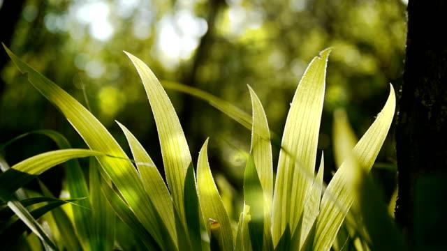 The spring grass