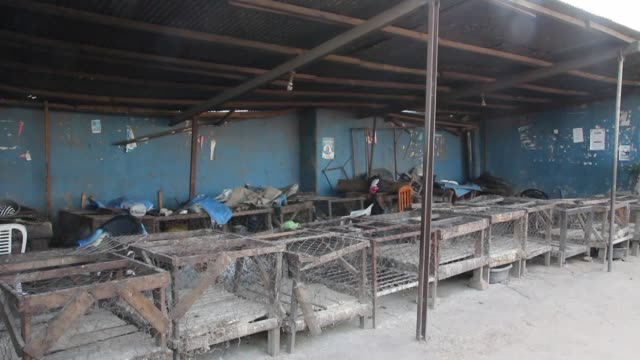 the start of zambia's school year has been postponed and all public gatherings banned to contain a cholera outbreak that has killed 61 people - vibrio stock videos & royalty-free footage