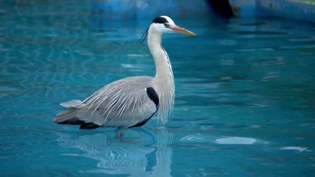 vídeos de stock e filmes b-roll de the stork is looking for victims. - bico