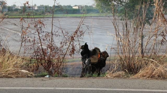 stockvideo's en b-roll-footage met de stomp werd verbrand met rook aan de kant van de weg. - boomstronk