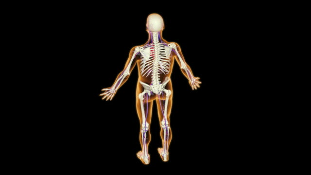 the subclavian artery - 鎖骨下動脈点の映像素材/bロール