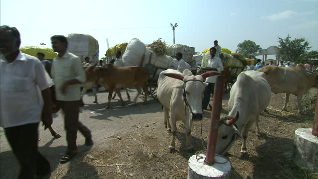 the suicide rate among indian farmers is soaring there have been more than 250000 suicides over the past 16 years that works out to one every half an... - selbstmord stock-videos und b-roll-filmmaterial