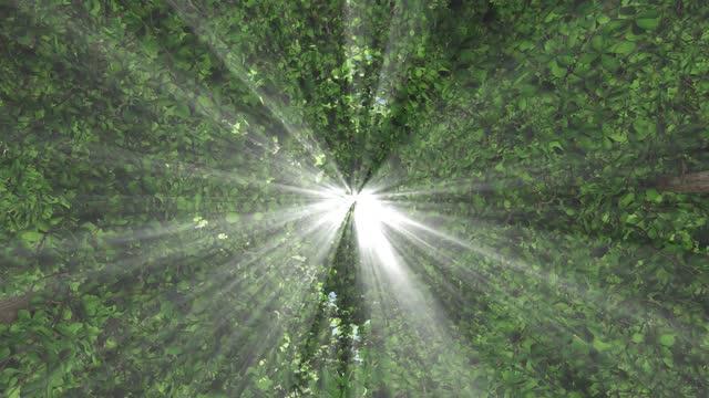 vidéos et rushes de le soleil jette ses beaux rayons dans la forêt verte fraîche, time lapse - éthéré