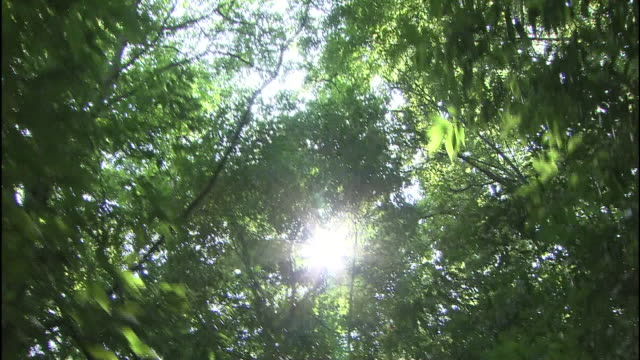 the sun glitters through lush tree branches on a trail in sayama hills in saitama-ken tokorozawa-shi, japan. - branch stock videos & royalty-free footage