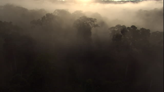 the sun highlights mist hanging over the rainforest canopy, borneo. available in hd. - borneo stock-videos und b-roll-filmmaterial