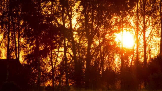 vídeos y material grabado en eventos de stock de el sol en las ramas de los árboles - soleado